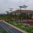 sama landscape design Krystal City